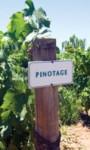 Pinotage