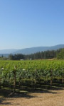 Shuswap wine region